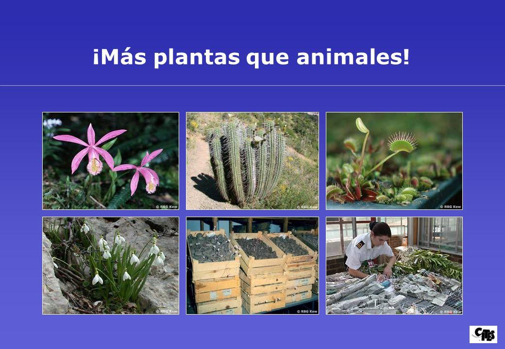 ¡Más plantas que animales!