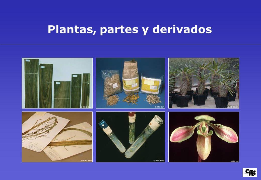Plantas, partes y derivados