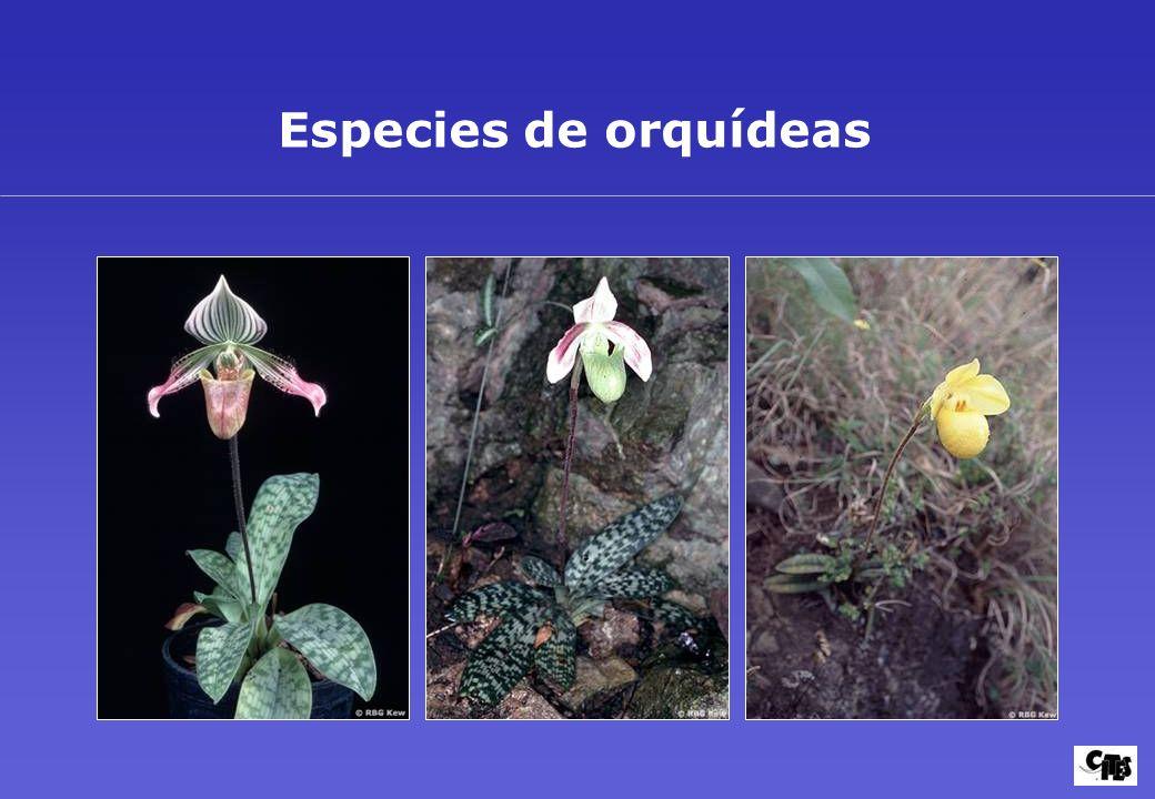 Grupos de plantas amparados por la CITES 20