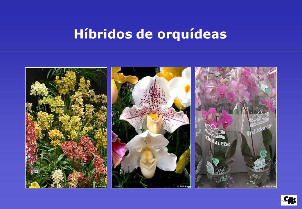 Grupos de plantas amparados por la CITES 21