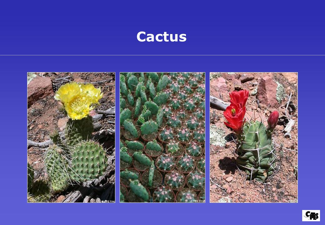 Gu a del usuario versi n ppt descargar for Cactus enanos por mayor