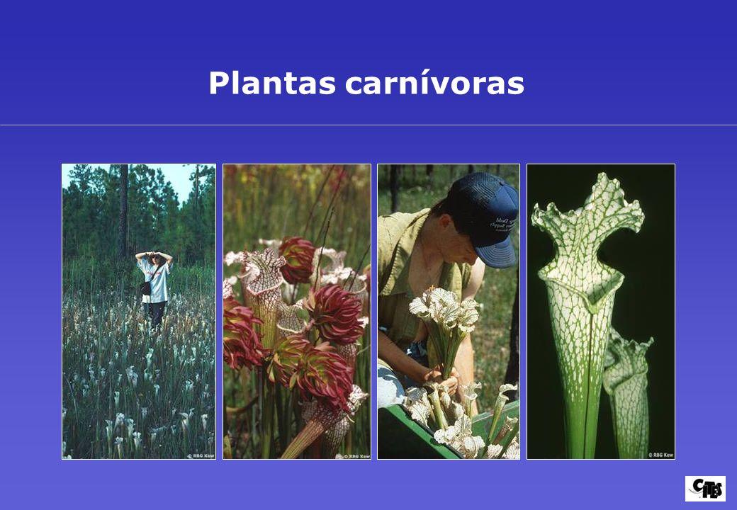 Grupos de plantas amparados por la CITES 24
