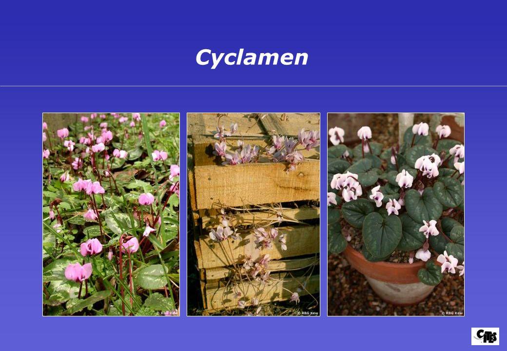 Grupos de plantas amparados por la CITES 27