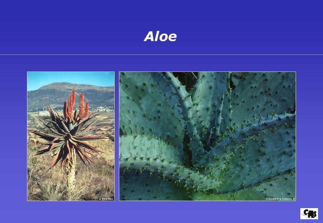 Grupos de plantas amparados por la CITES 28