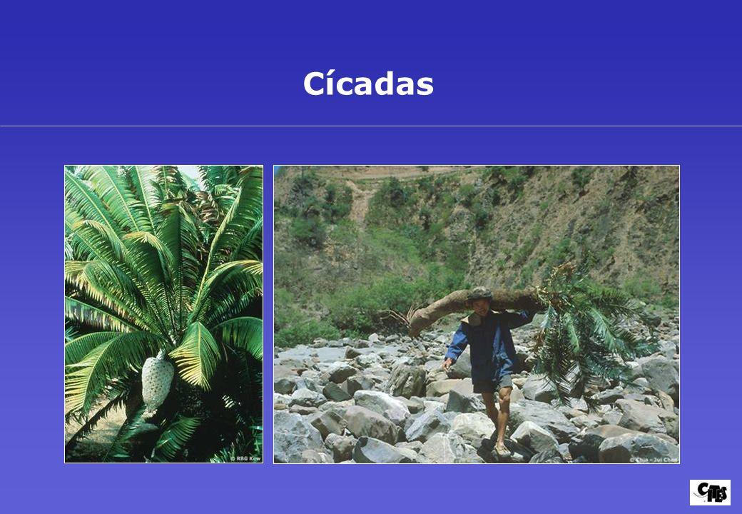 Grupos de plantas amparados por la CITES 30