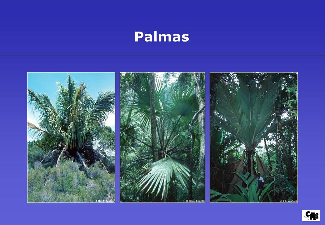 Grupos de plantas amparados por la CITES 31