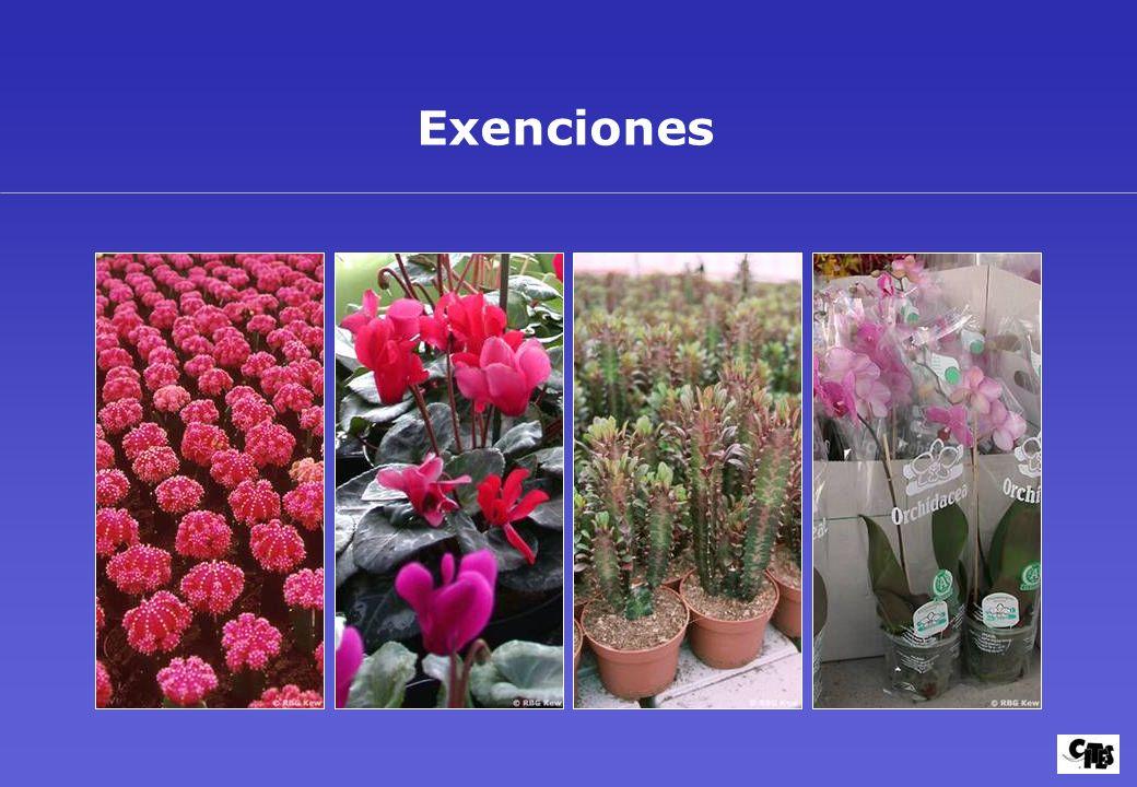 Grupos de plantas amparados por la CITES 36