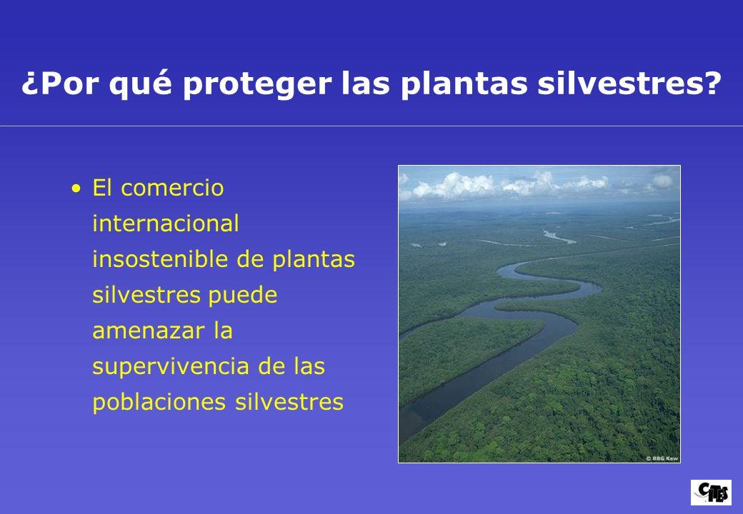 ¿Por qué proteger las plantas silvestres