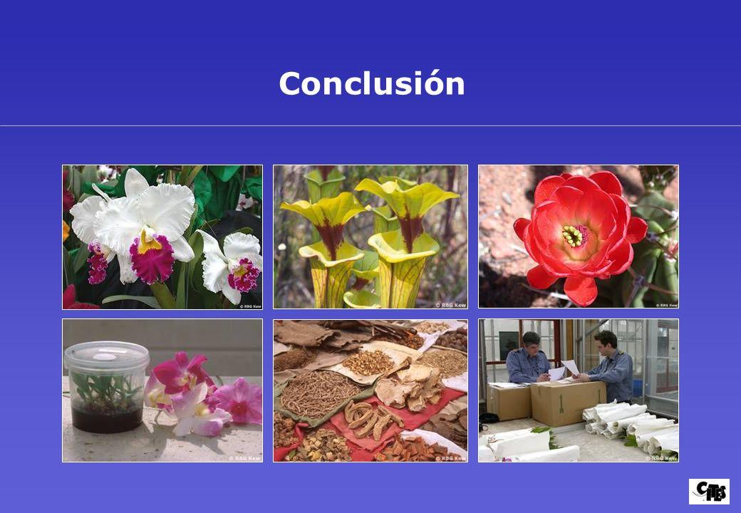 Conclusión Diapositiva 46: Conclusión