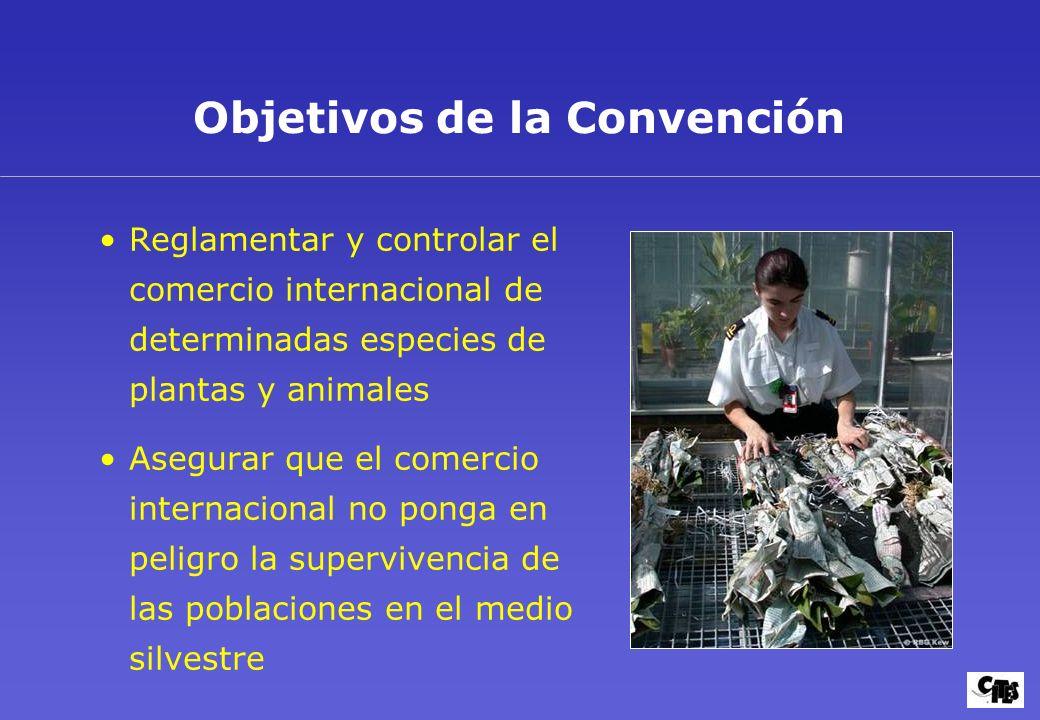 Objetivos de la Convención