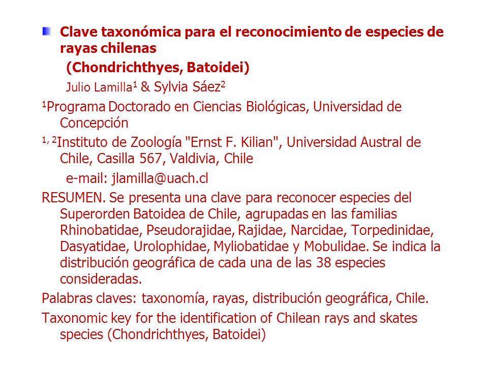 Clave taxonómica para el reconocimiento de especies de rayas chilenas