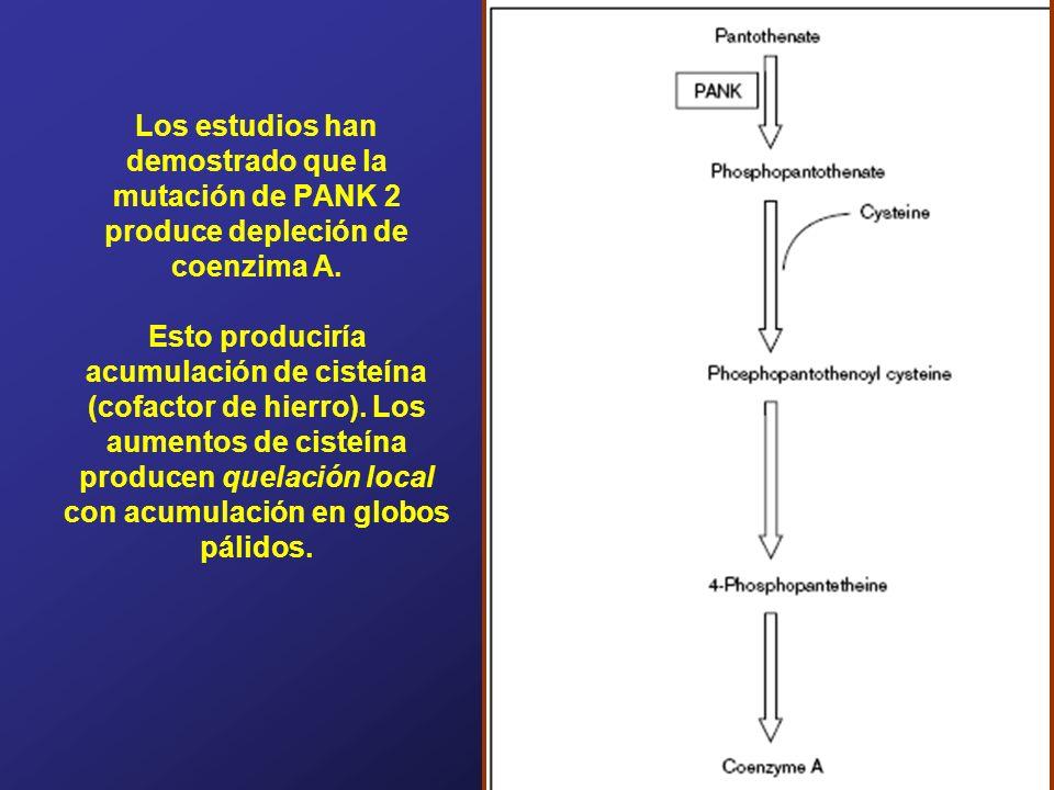 Los estudios han demostrado que la mutación de PANK 2 produce depleción de coenzima A.