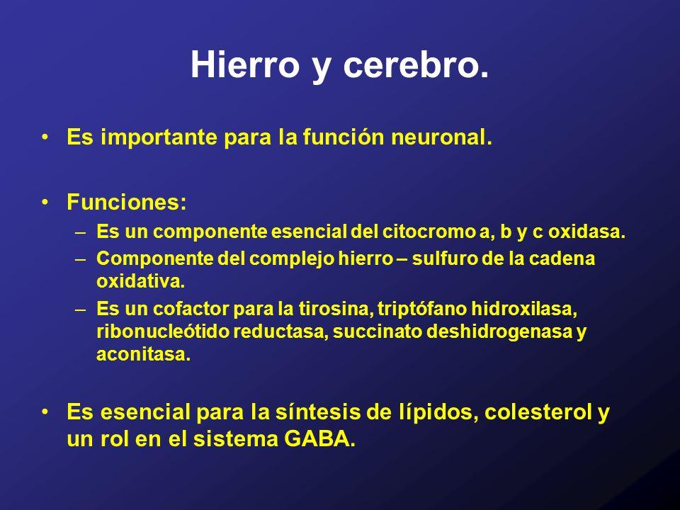 Hierro y cerebro. Es importante para la función neuronal. Funciones: