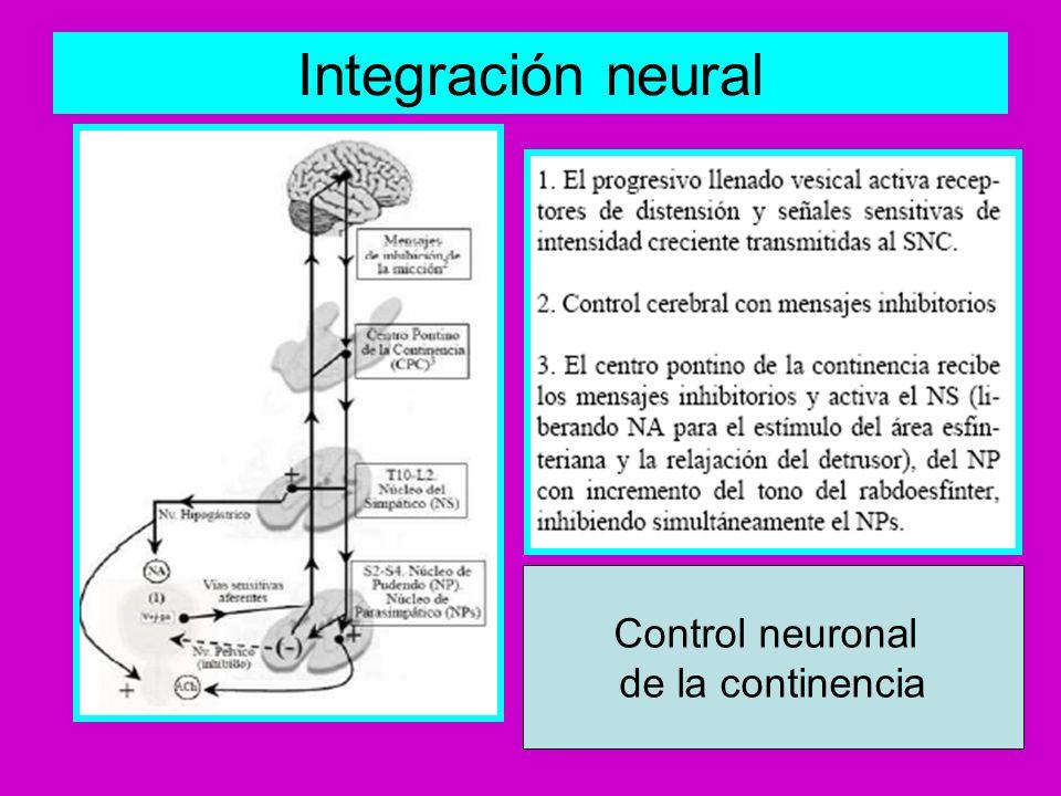 Integración neural Control neuronal de la continencia