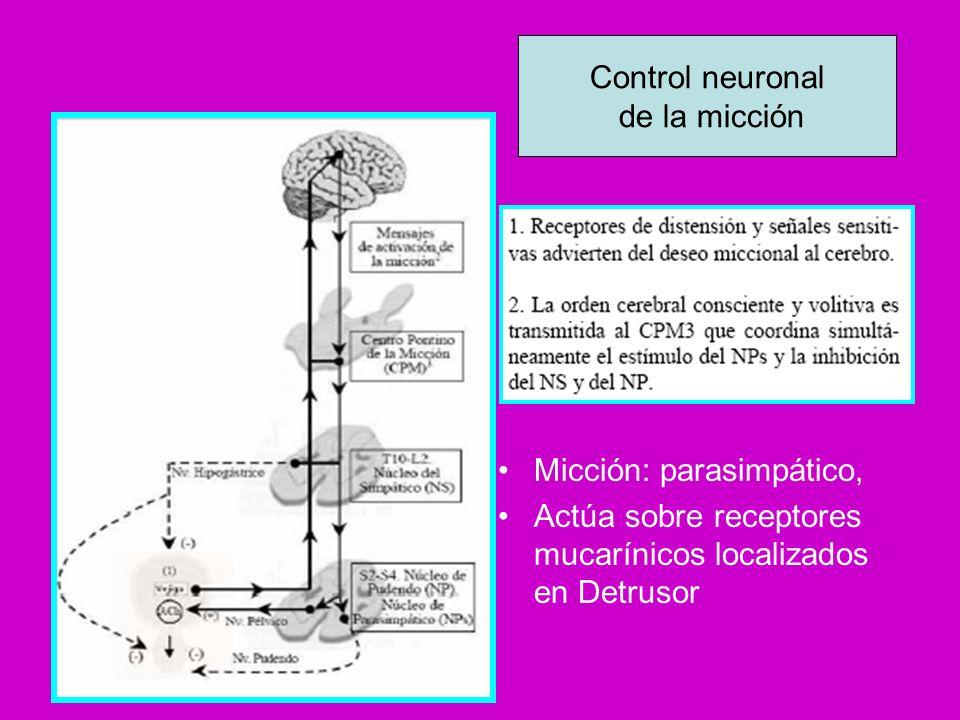 Control neuronal de la micción.