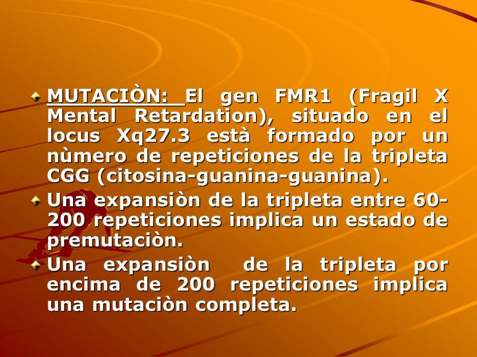 MUTACIÒN: El gen FMR1 (Fragil X Mental Retardation), situado en el locus Xq27.3 està formado por un nùmero de repeticiones de la tripleta CGG (citosina-guanina-guanina).