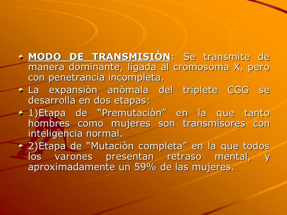 La expansiòn anòmala del triplete CGG se desarrolla en dos etapas: