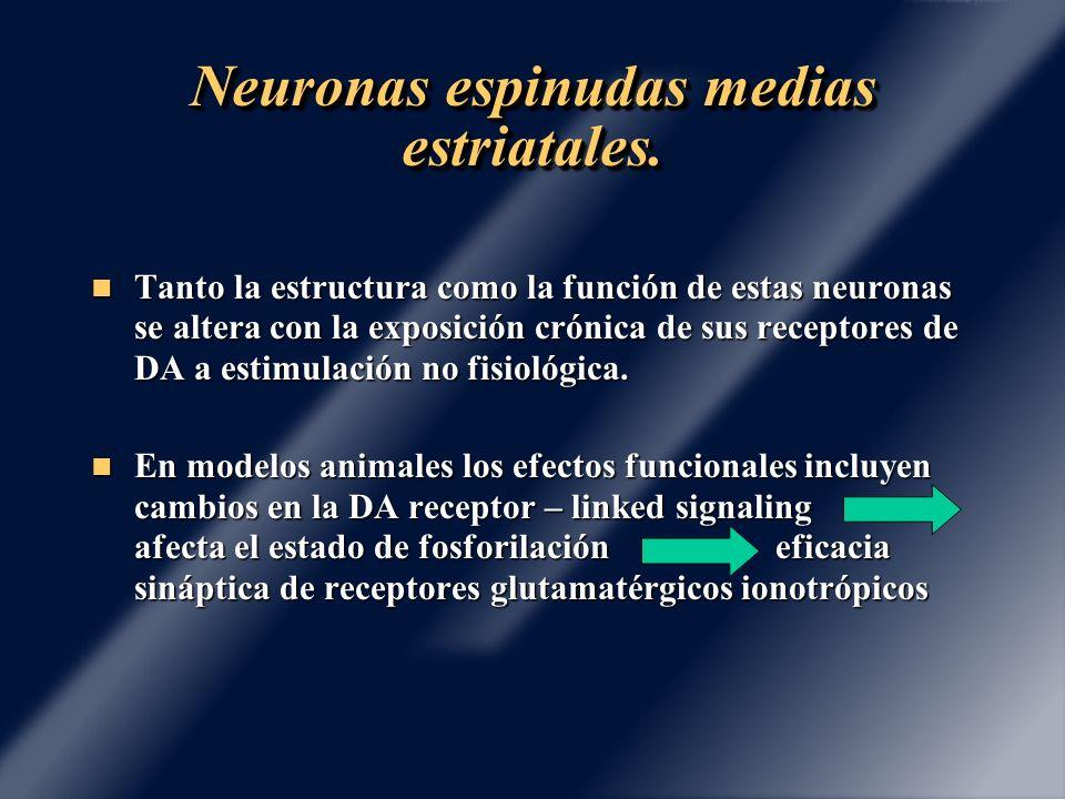 Neuronas espinudas medias estriatales.