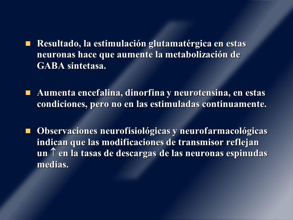 Resultado, la estimulación glutamatérgica en estas neuronas hace que aumente la metabolización de GABA sintetasa.