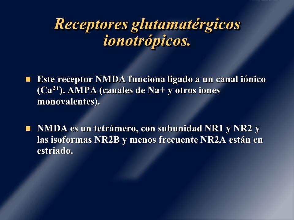 Receptores glutamatérgicos ionotrópicos.