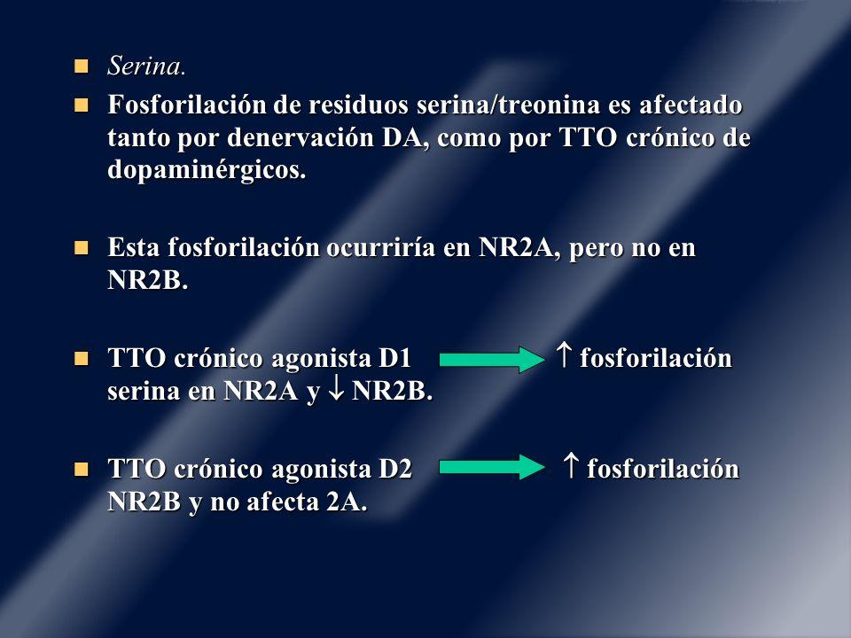 Serina. Fosforilación de residuos serina/treonina es afectado tanto por denervación DA, como por TTO crónico de dopaminérgicos.