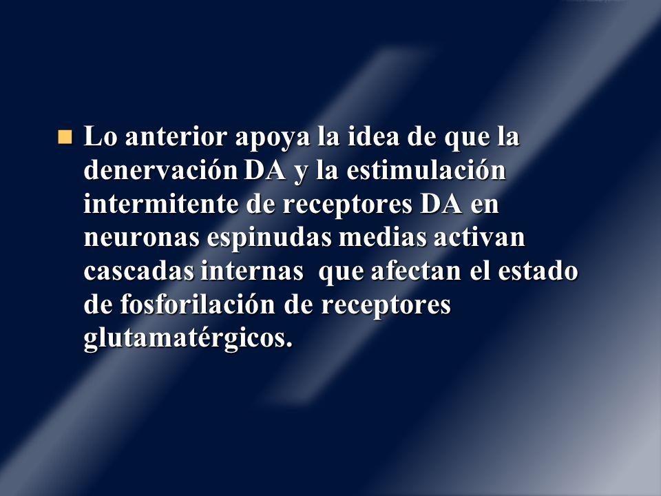 Lo anterior apoya la idea de que la denervación DA y la estimulación intermitente de receptores DA en neuronas espinudas medias activan cascadas internas que afectan el estado de fosforilación de receptores glutamatérgicos.