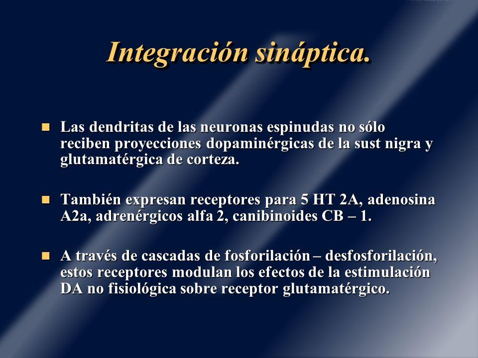 Integración sináptica.