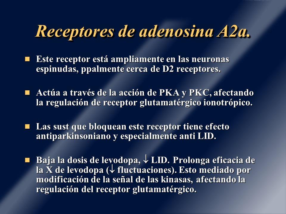 Receptores de adenosina A2a.