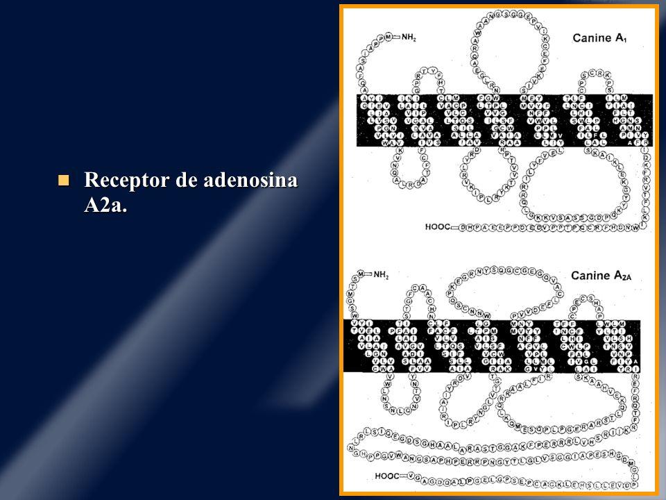 Receptor de adenosina A2a.