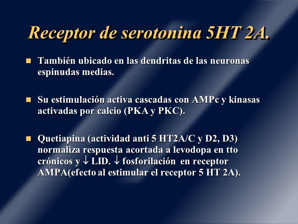 Receptor de serotonina 5HT 2A.