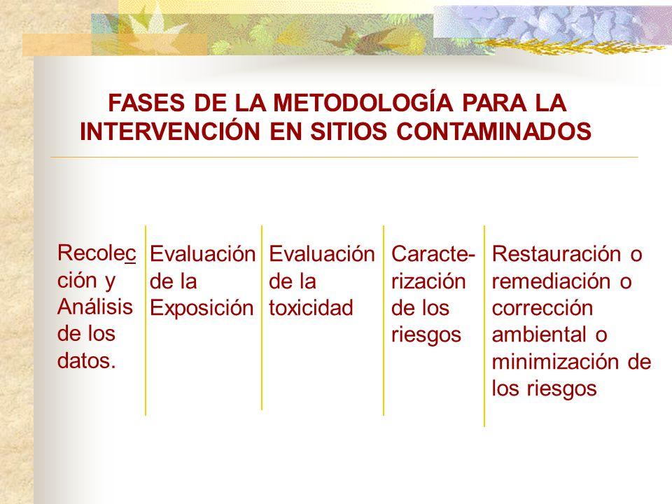 FASES DE LA METODOLOGÍA PARA LA