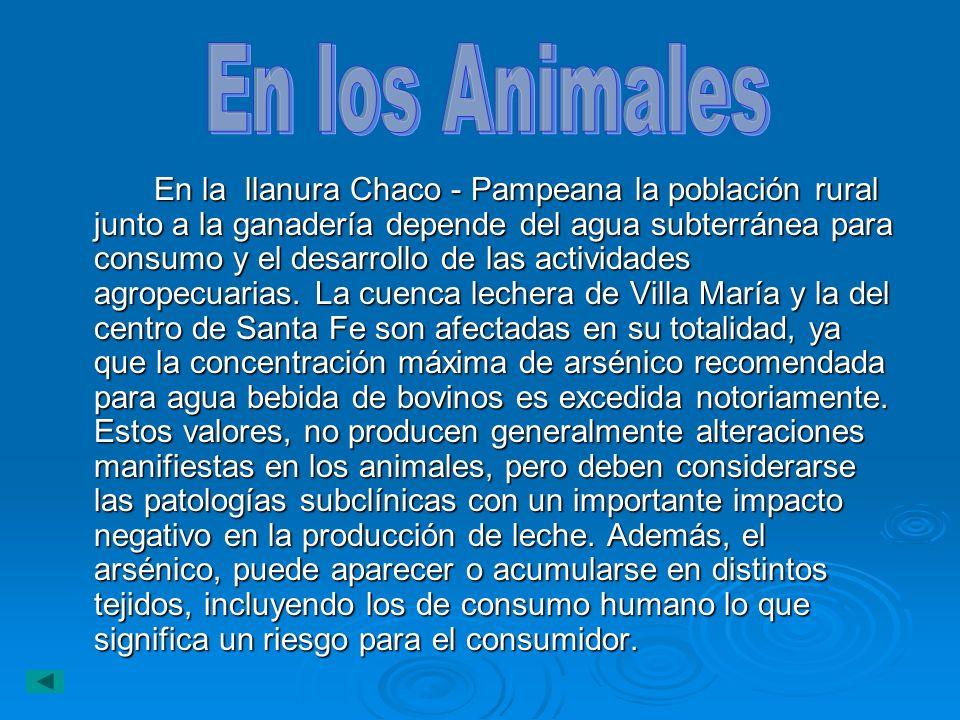 En los Animales