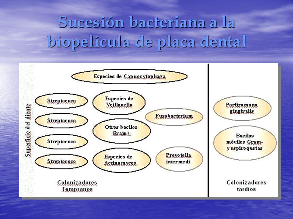 Sucesión bacteriana a la biopelícula de placa dental