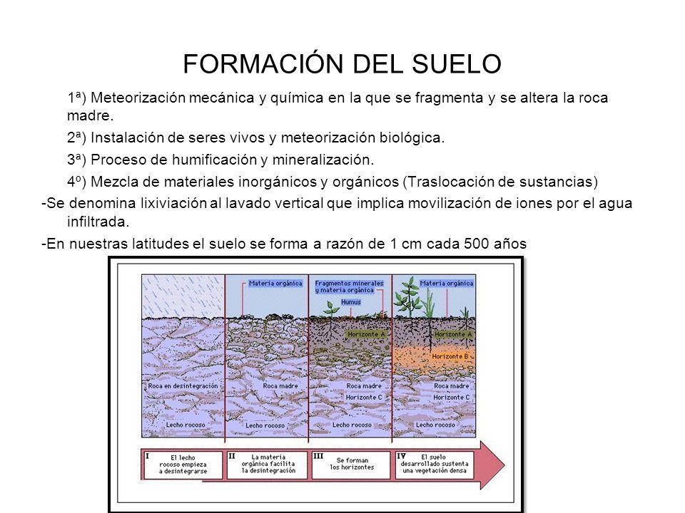Ambiente sedimentario procesos petrogen ticos ppt for Proceso de formacion del suelo