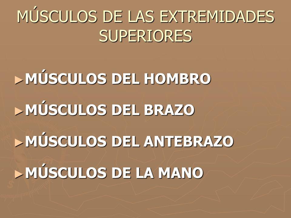 MÚSCULOS DE LAS EXTREMIDADES SUPERIORES