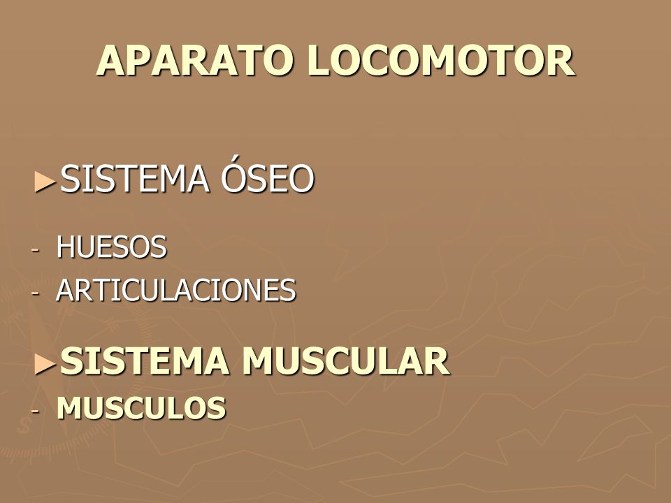 APARATO LOCOMOTOR SISTEMA ÓSEO SISTEMA MUSCULAR HUESOS ARTICULACIONES