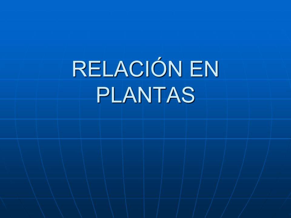 RELACIÓN EN PLANTAS