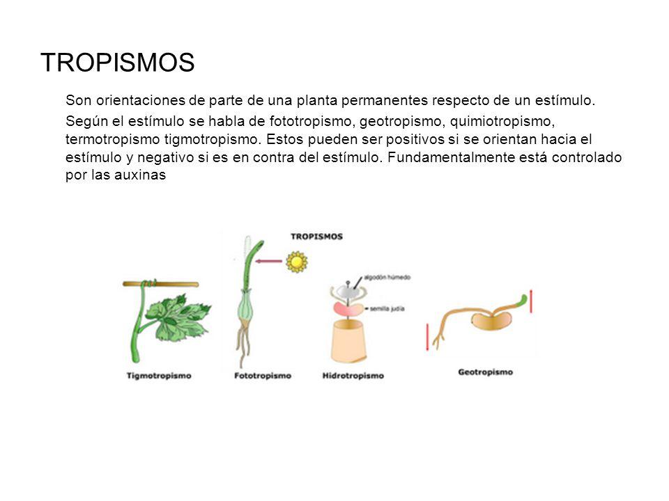 TROPISMOS Son orientaciones de parte de una planta permanentes respecto de un estímulo.