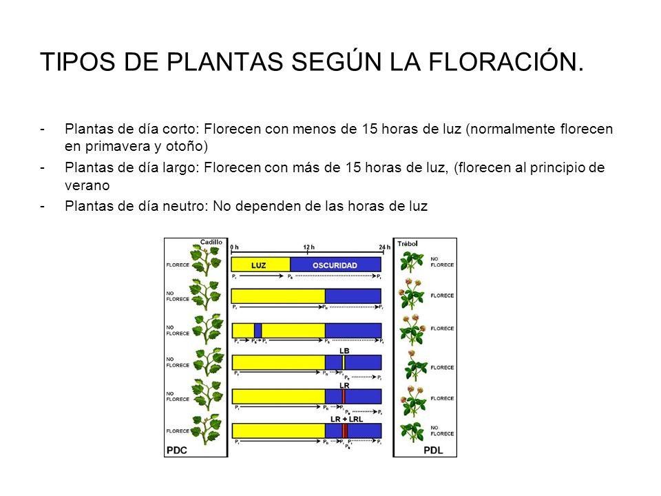 TIPOS DE PLANTAS SEGÚN LA FLORACIÓN.