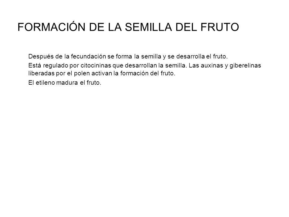 FORMACIÓN DE LA SEMILLA DEL FRUTO