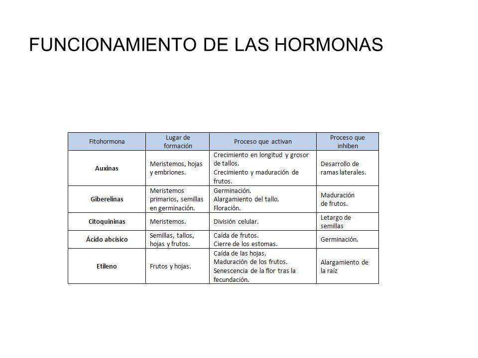FUNCIONAMIENTO DE LAS HORMONAS