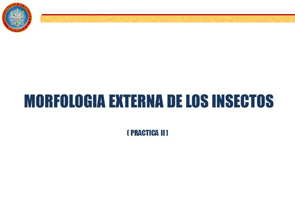 MORFOLOGIA EXTERNA DE LOS INSECTOS - ppt video online descargar