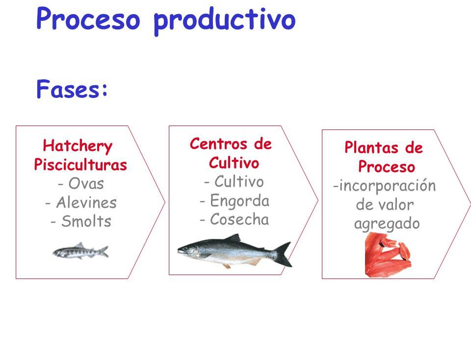 Proceso productivo Fases:
