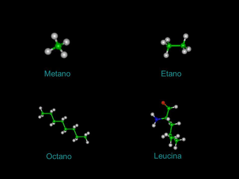 Metano Etano Octano Leucina