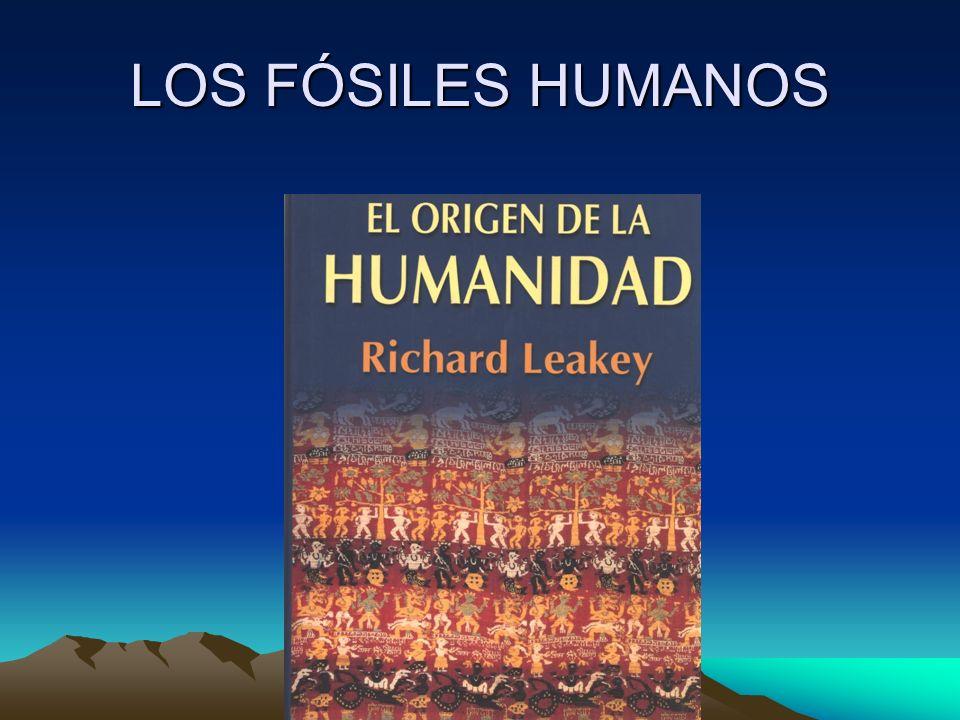 LOS FÓSILES HUMANOS