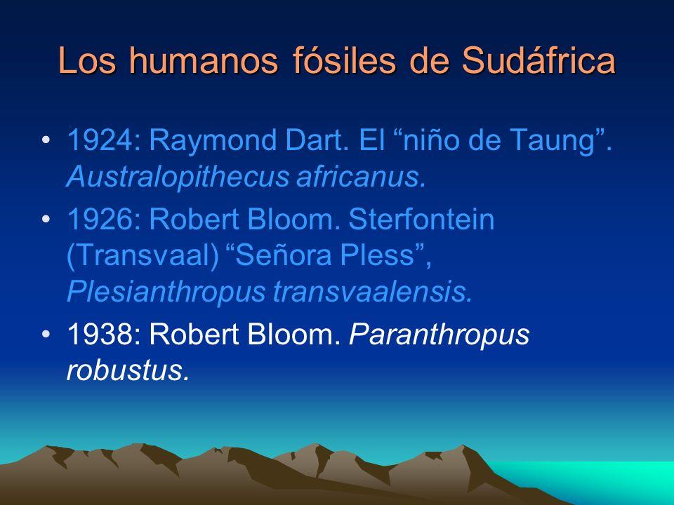 Los humanos fósiles de Sudáfrica