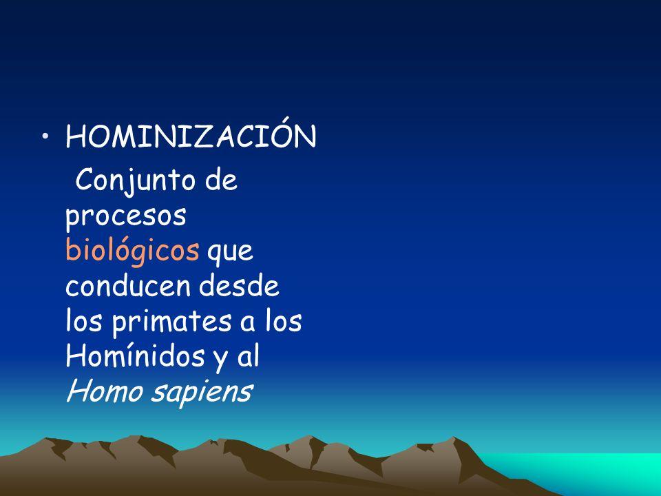 HOMINIZACIÓN Conjunto de procesos biológicos que conducen desde los primates a los Homínidos y al Homo sapiens.