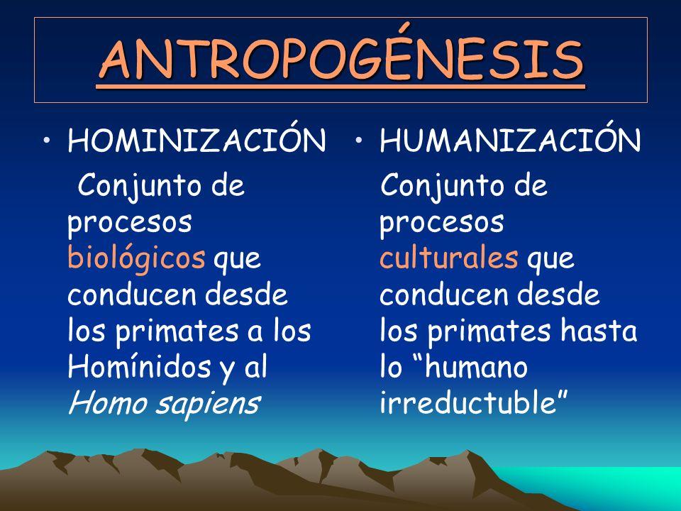 ANTROPOGÉNESIS HOMINIZACIÓN