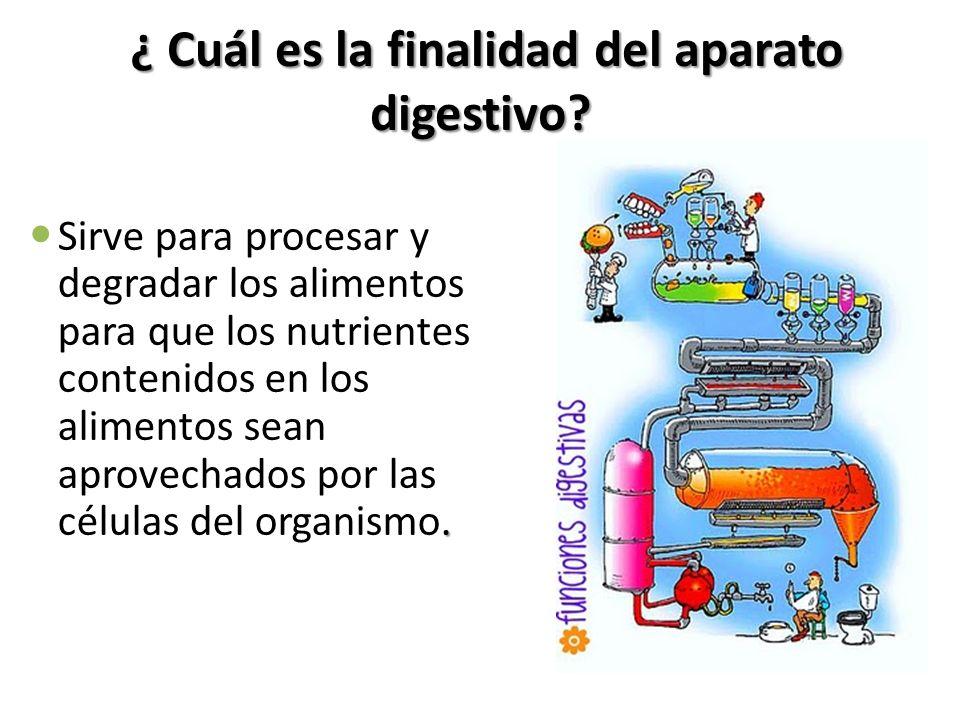 ¿ Cuál es la finalidad del aparato digestivo