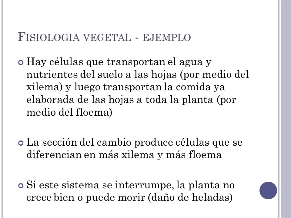 Fisiologia vegetal - ejemplo